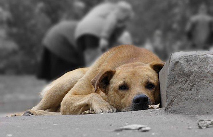 У Львові собаки покусали півтисячі людей
