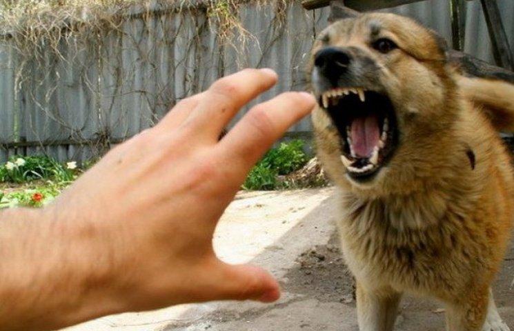 Через заборону полювання на Дніпропетровщині люди почали вмирати від сказу