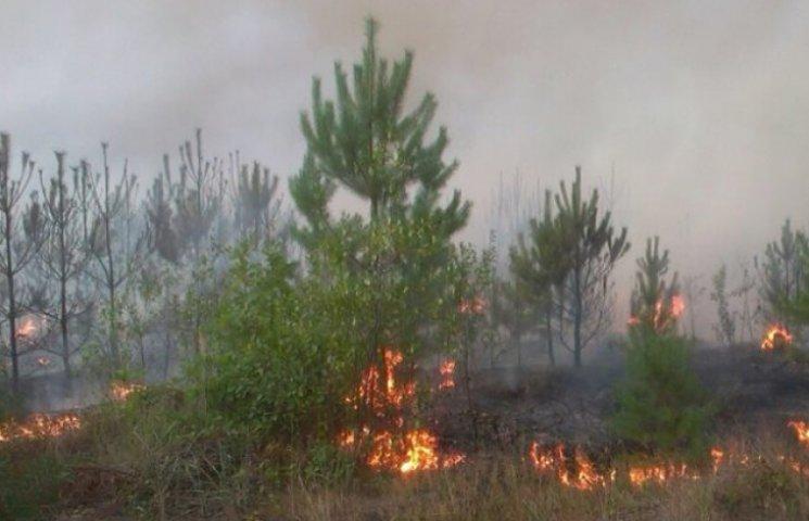 На Ізяславщині горить 50 гектарів лісу