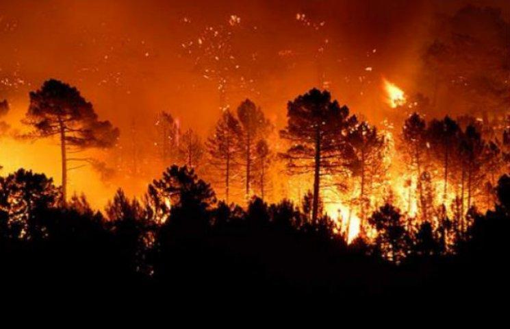 Чому горить ліс під Києвом