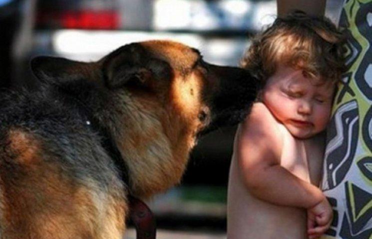 У Кременчуцькому районі собака напала на 6-річну дитину