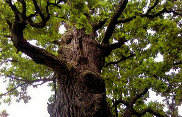 Чоловік нарубав дров на 25 тисяч гривень