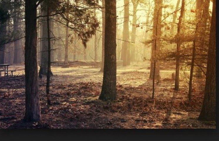 На Дніпропетровщині у хвойних лісах можна отримати хімічне отруєння