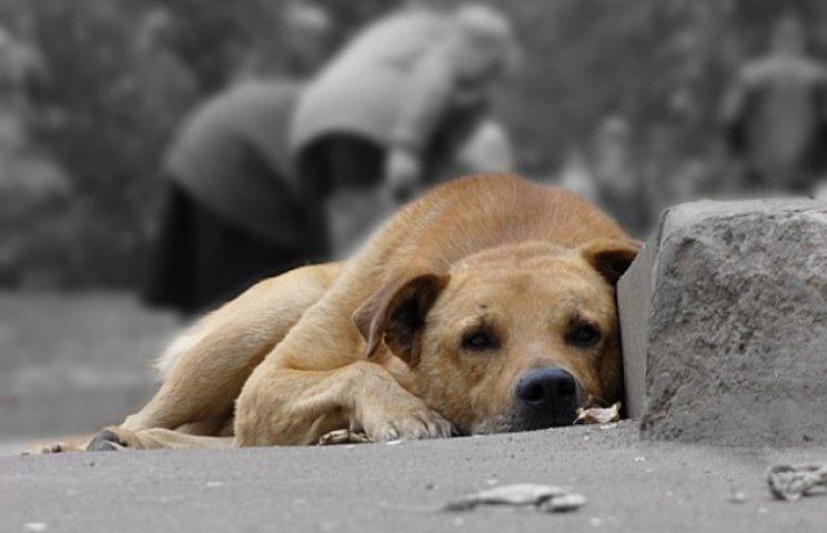 У Львові безпритульних собак будуть відловлювати з допомогою рушниць за 3460 євро