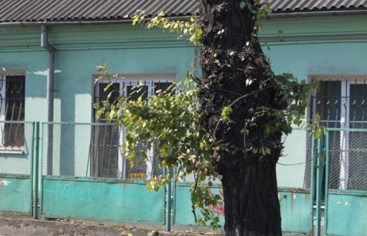 В центрі Львова замість дерев залишилися пеньки