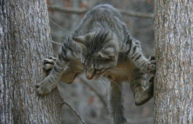 МНС Одеси котів рятує швидше за людей