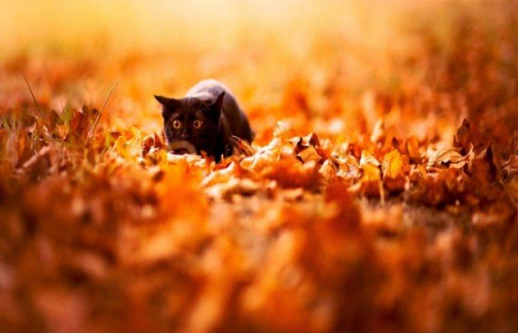 Як тварини насолоджуються неперевершеністю осені