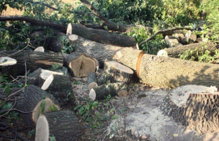 У Глобинському районі незаконно вирубували дуби