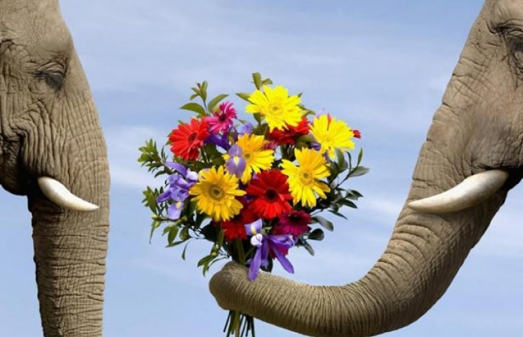 Мімішними бувають не лише коти: 11 фото до дня захисту слонів