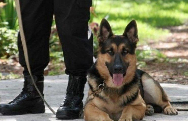 На Полтавщині службовий пес знайшов закопані наркотики