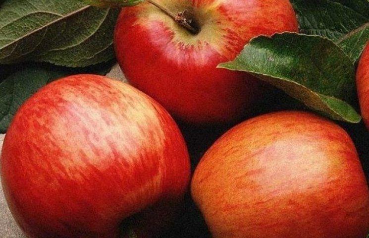 На Вінниччині цьогоріч зберуть рекордний врожай яблук
