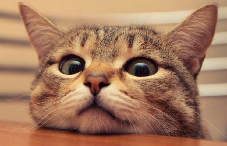 """Кіт їсть м'ясо у вітрині київського супермаркету """"Велика кишеня"""" - Цензор.НЕТ 3928"""