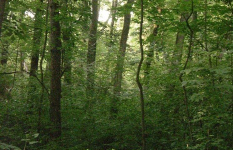 Більше 20 мільйоннів рентної плати сплатили лісокористувачі Хмельниччини