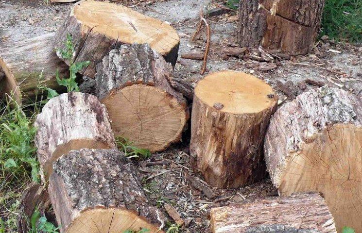 На Хмельниччині понищили дерева зоологічного заказника
