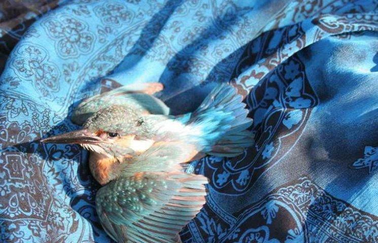 """Відома запорізька зоозахисниця бореться за життя """"птаха щастя"""""""