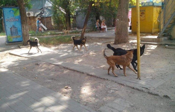 Зграї агресивних псів продовжуть тероризувати миколаївців