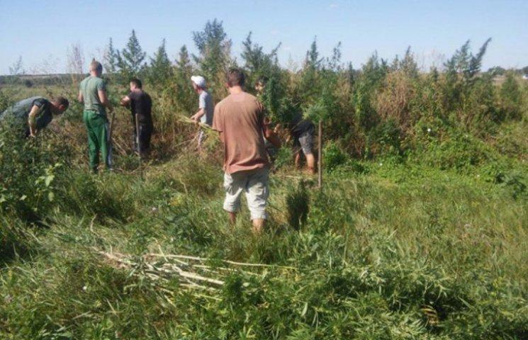 На Миколаївщині викрили плантацію наркотиків на 3 млн грн