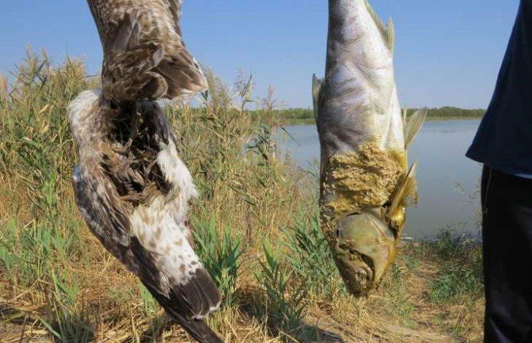 У ставку на Мелітопольщині з невідомих причин розпочався масовий мор риби, проте рибалок це не зупиняє