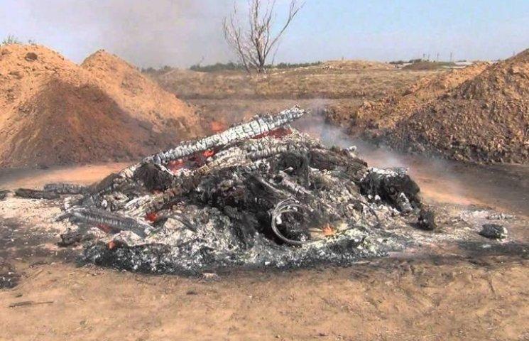 На Николаевщине люди не могут дышать из-за ужасного смрада от сжигания тысяч свиней