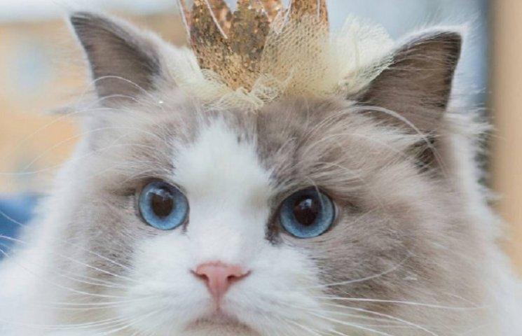 Принцеса Аврора: кішка із розкішним гардеробом та короною полонила серця людей