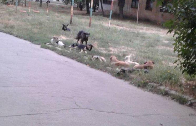 У Миколаєві зграя собак біля школи напала на людину