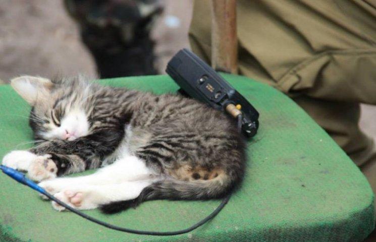 За что котам в АТО нужно поставить памятник-8