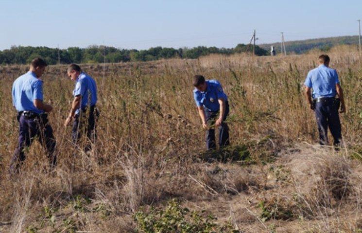 На Миколаївщині виявили плантацію з майже тисячі кущів коноплі