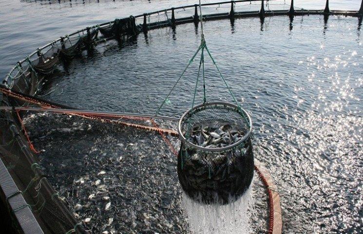 Компанії-імпортери риби і морепродуктів вперше в Україні займуться аквакультурою