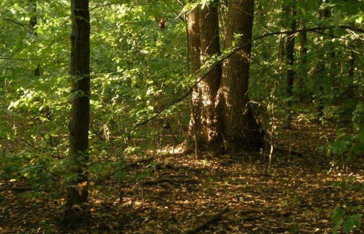 На Хмельниччині дерево насмерть привалило юнака