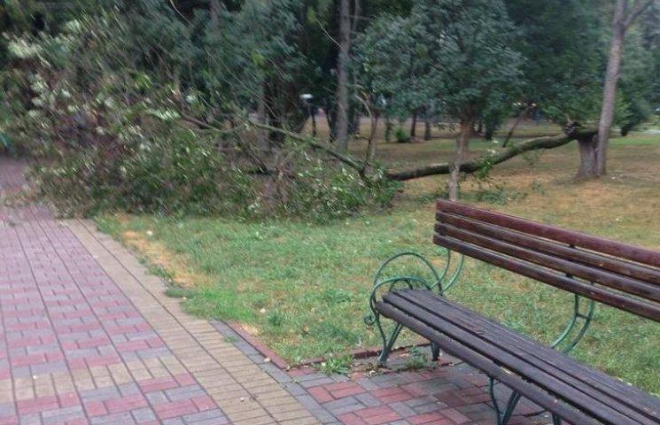Нічний вітер залишив Хмельницький без райських яблук
