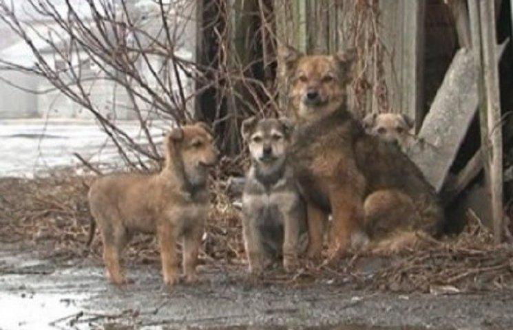 """Прибуткова """"Надія"""" дбатиме про чисельність безпритульних тварин у Хмельницькому"""