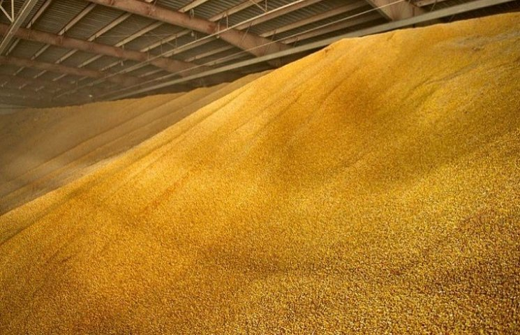 На Дунаєвеччині чоловіка задушила кукурудза