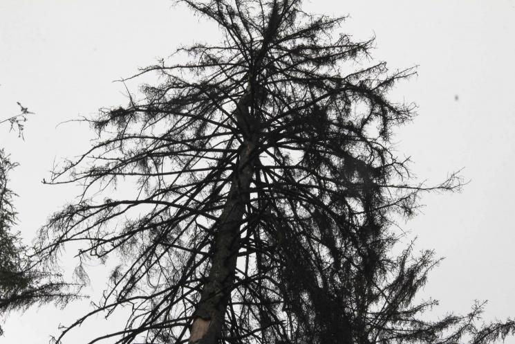 """Чому у Вінниці П'ятничанський парк перетворився на """"ялинковий могильник"""""""