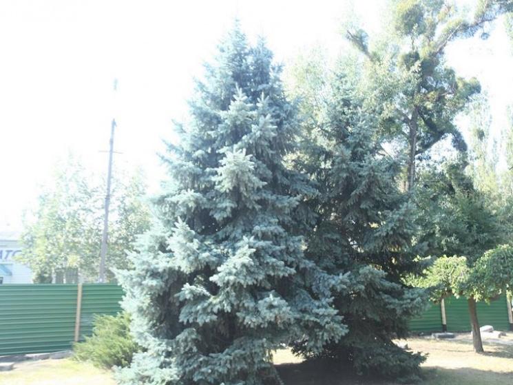 Картинки по запросу фото уничтожение деревьев новомосковск