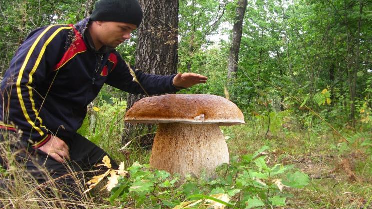 На Рівненщині знайшли гриба-патріота (ФО…
