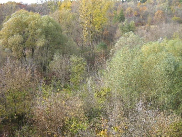 """Дерев'яні """"потопельники"""" та лежбище моржів: Який парк називають наймістичнішим у Харкові"""