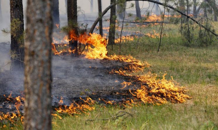 Догасіння масштабної пожежі наХарківщині залучили літак,— ДСНС