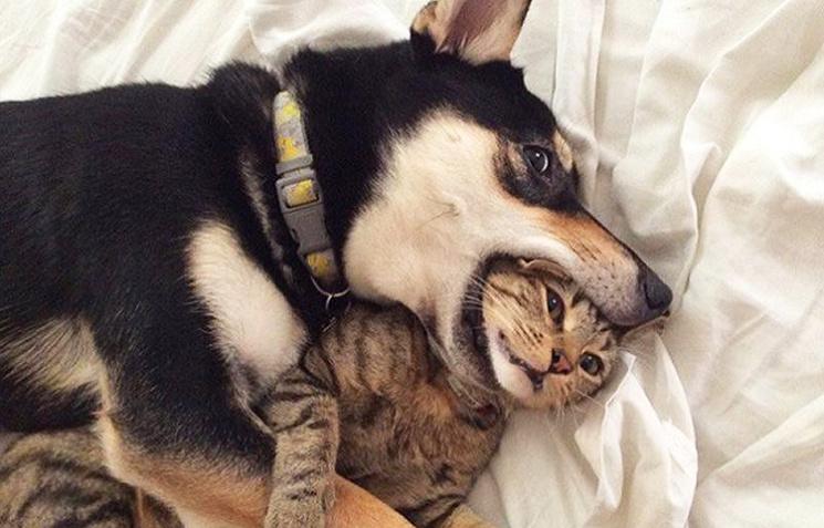 25 забавных моментов совместной жизни собак и кошек