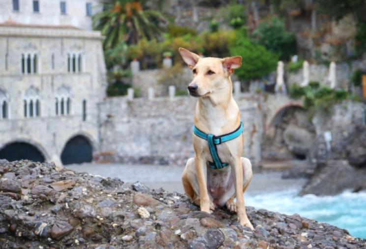 ТОП-7 бродячих животных, которые покорили Instagram