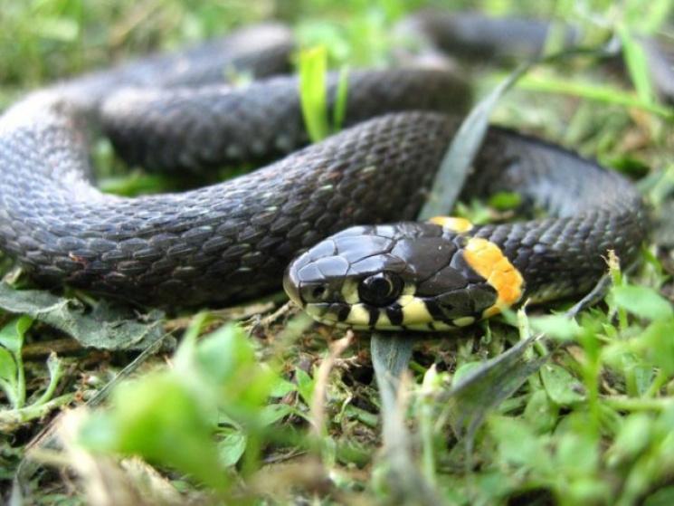 """Чому у """"зміїне"""" свято, 25 вересня, у ліс…"""