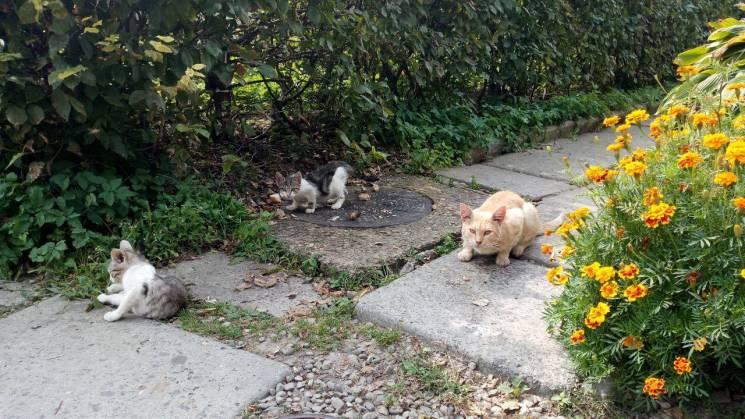 Як зустрічають осінь моршинські коти (ФО…