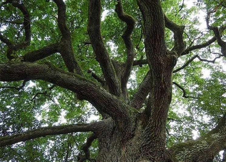У Білоріченському районі підприємець нарубав дерев на 21 млн рублів