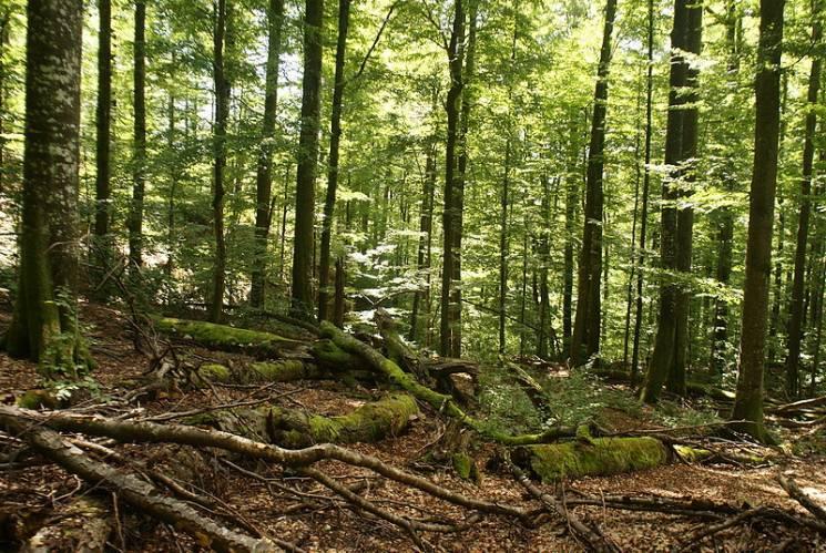 Всі в зелене: У неділю Закарпаття відзначатиме День лісу
