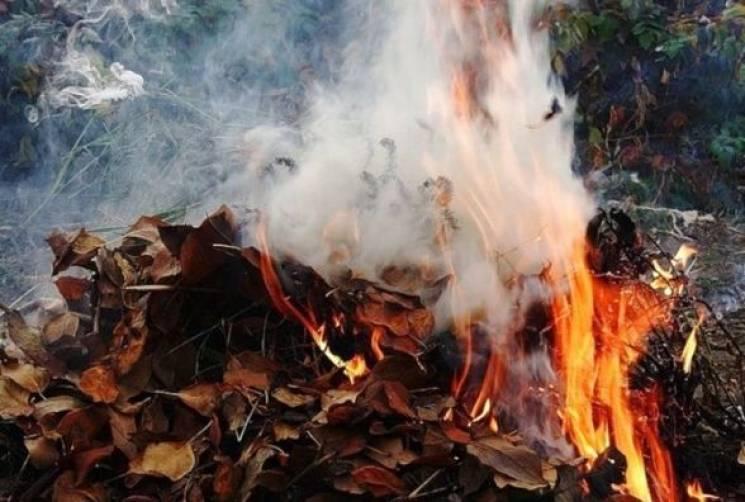 Вінничанам нагадують про штрафи за спалювання листя