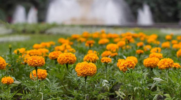 У Вінниці починається бабине літо