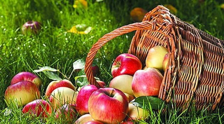 На Прикарпатті шукатимуть найбільше яблу…