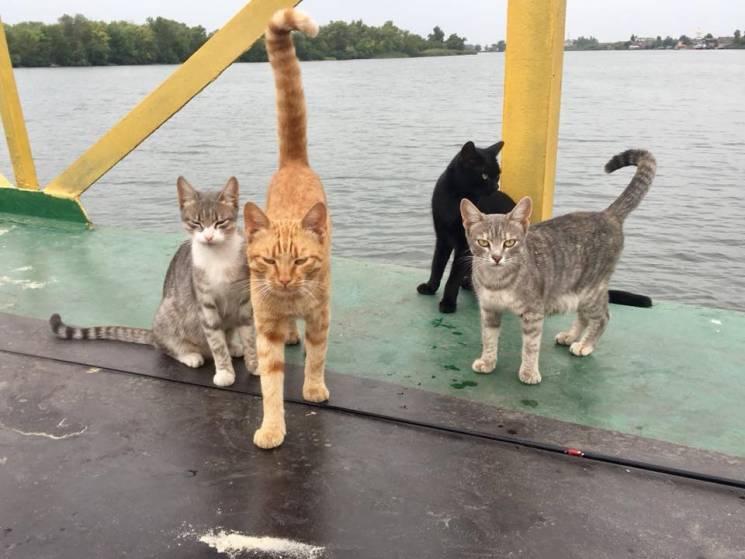 Як у херсонському Гідропарку коти-безхатьки чекають на рибальський улов (ФОТО)