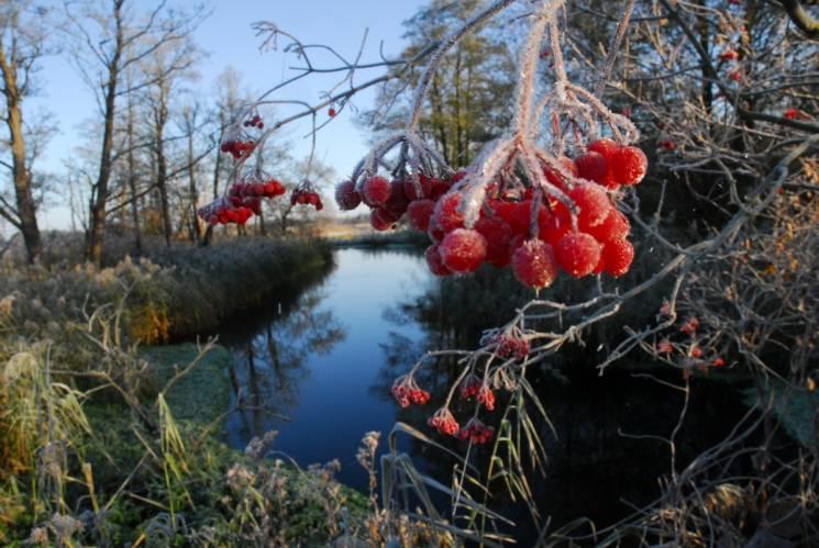 В Украине прогнозируют первые заморозки, и начнутся они с Запада