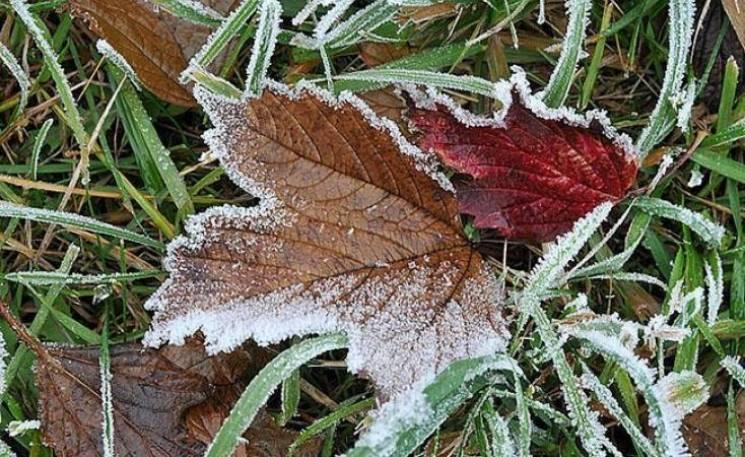 Зима наближається: Киянам анонсували заморозки