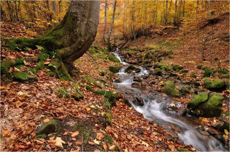 """Чому у """"зміїне"""" свято, 25 вересня, у ліс краще не ходити"""